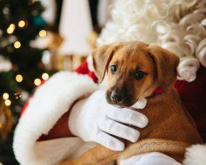 santa claus holding a puppy