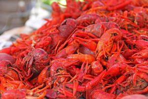 mardi gras: red crawfish