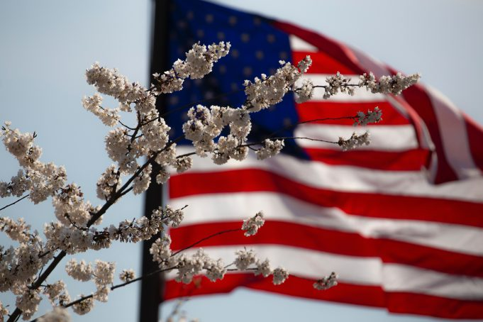 Veterans Day: american flag with white tree flowers in front